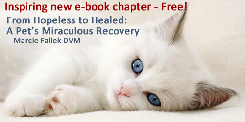 Marcie Fallek DVM CVA Holistic Veterinarian - Dead Cat Walking